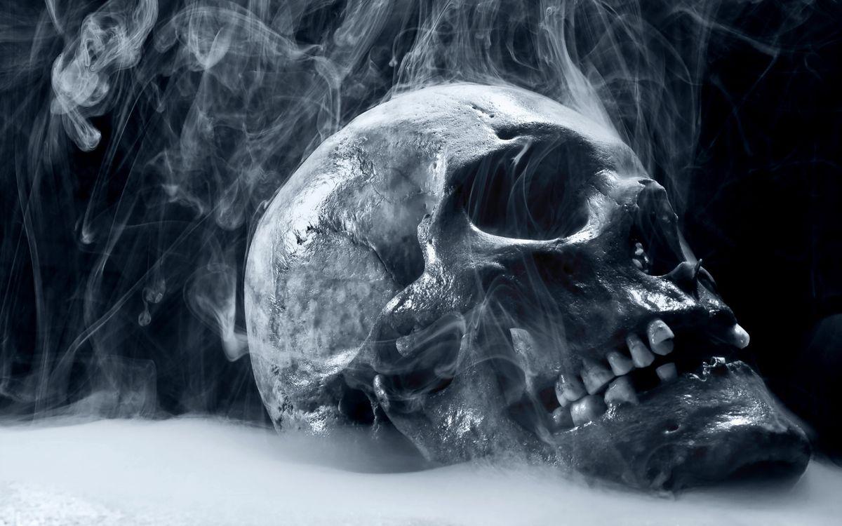Фото бесплатно череп, кость, зубы - на рабочий стол