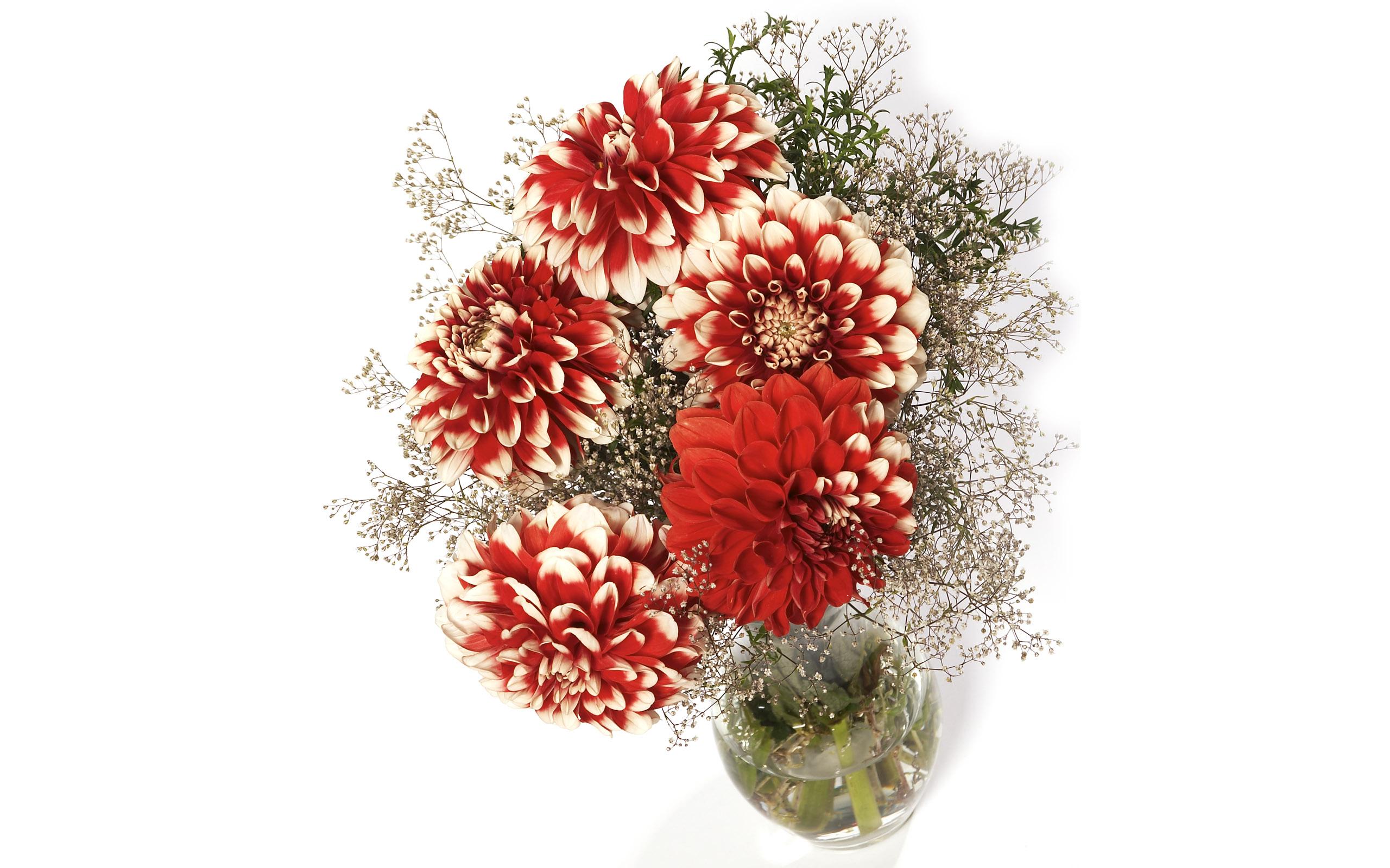 хризантемы, красные, букет