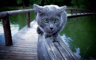 Заставки кот, серый, дымчатый
