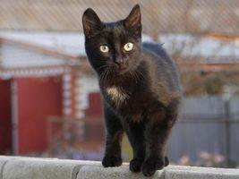 Фото бесплатно кот, забор, дом