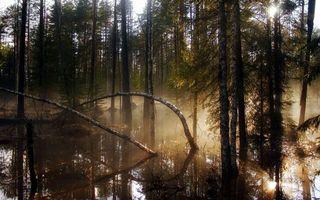 Бесплатные фото лес,деревья,вода,потоп,туман,солнце,природа