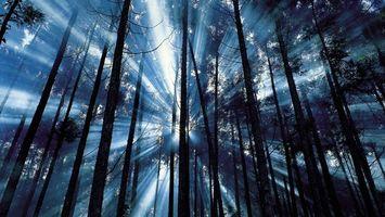 Бесплатные фото лес,деревья,свет,лучи,листья,ветки,парк
