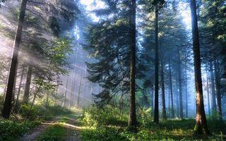 Фото бесплатно дорога, дерево, лес