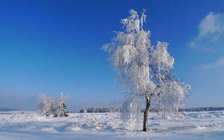 Бесплатные фото небо,облака,зима,снег,деревья,ветки,мороз