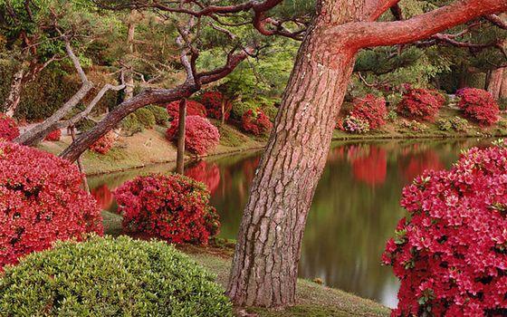 Заставки отражение, кусты, деревья
