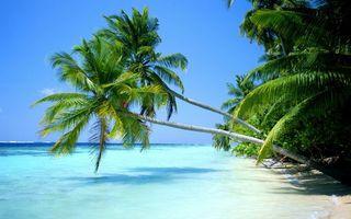 Фото бесплатно пальмы, деревья, листья