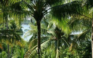 Photo free palms, tropics, island