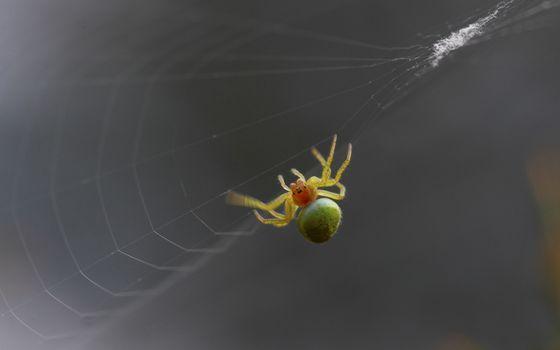 Заставки паук, паутина, лапки, конечности, начекомые, макро