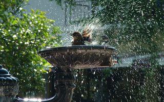 Бесплатные фото птица,брызни,природа,красиво,вода,ярко,птицы