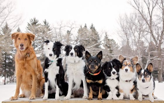 Photo free dogs, different, faces