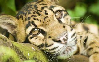 Бесплатные фото тигр,тигренок,лежит,трава,шерсть,окрас,пух