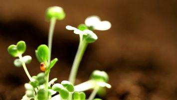 Фото бесплатно трава, листья, цветок