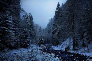 Бесплатные фото зима,снег,речка,лес,деревья,ночь,пейзаж