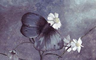 Бесплатные фото бабочка,на цветке,на ромашке,синяя,рендеринг