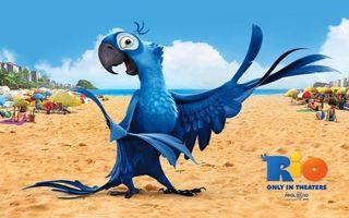Фото бесплатно рио-де-жанейро, мультфильм, птица, попугай, рио
