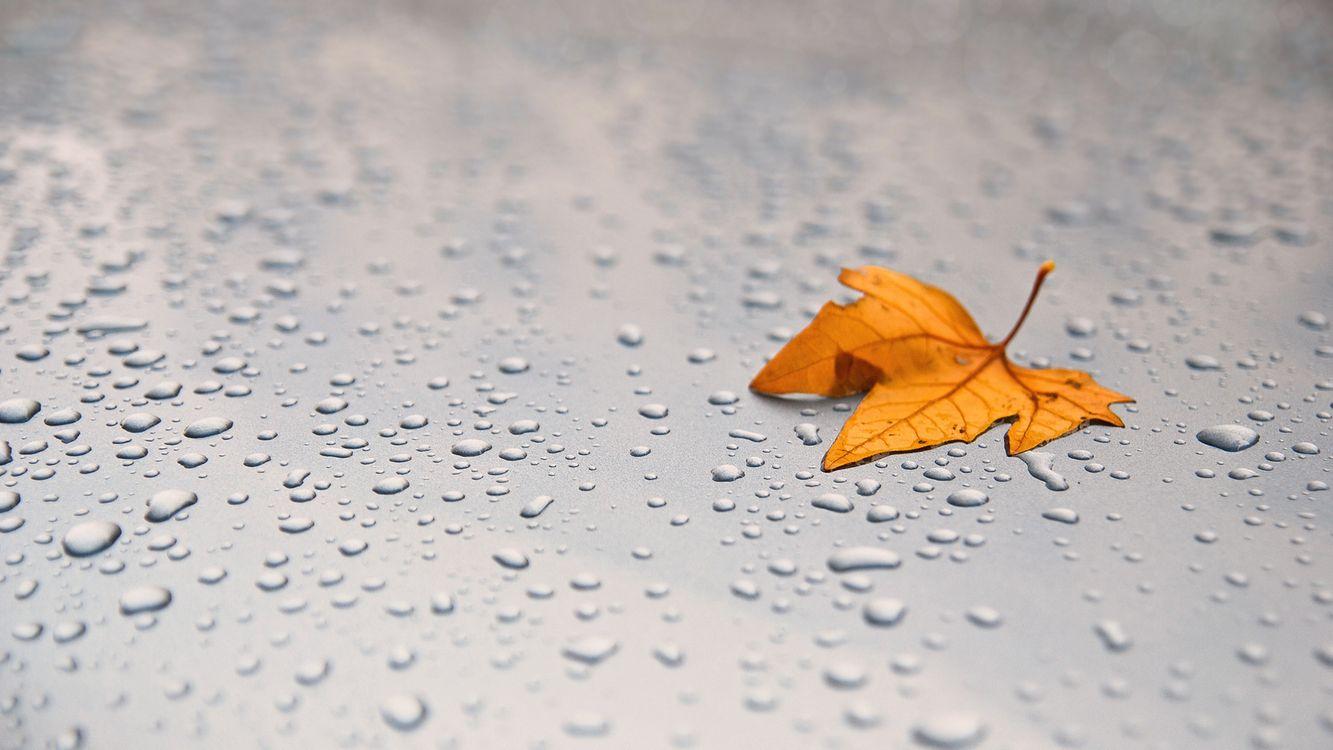 Фото бесплатно листочек, листок, листочки, листья, листки, капля, разное