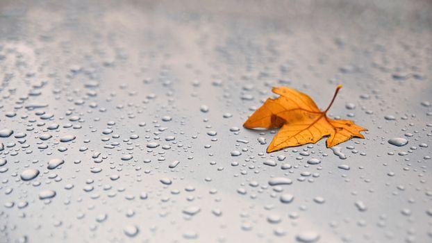 Бесплатные фото листочек,листок,листочки,листья,листки,капля