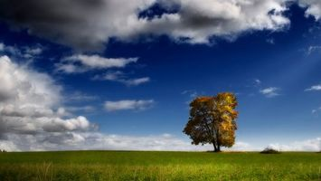 Бесплатные фото дерево, поле, трава, небо, облака, горизонт, природа