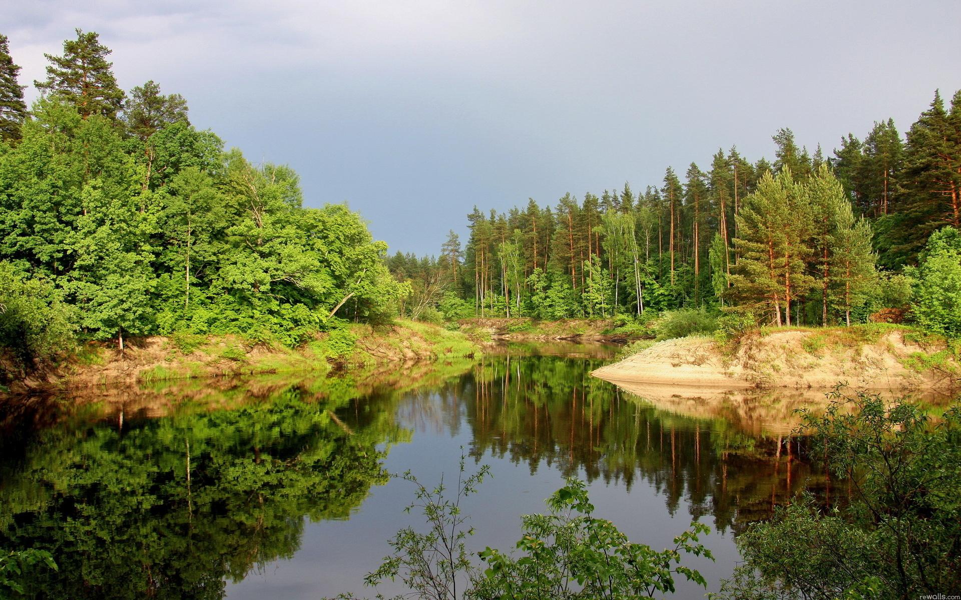 деревья, лес, елки