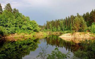 Бесплатные фото деревья,лес,елки,крона,зелень,небо,река