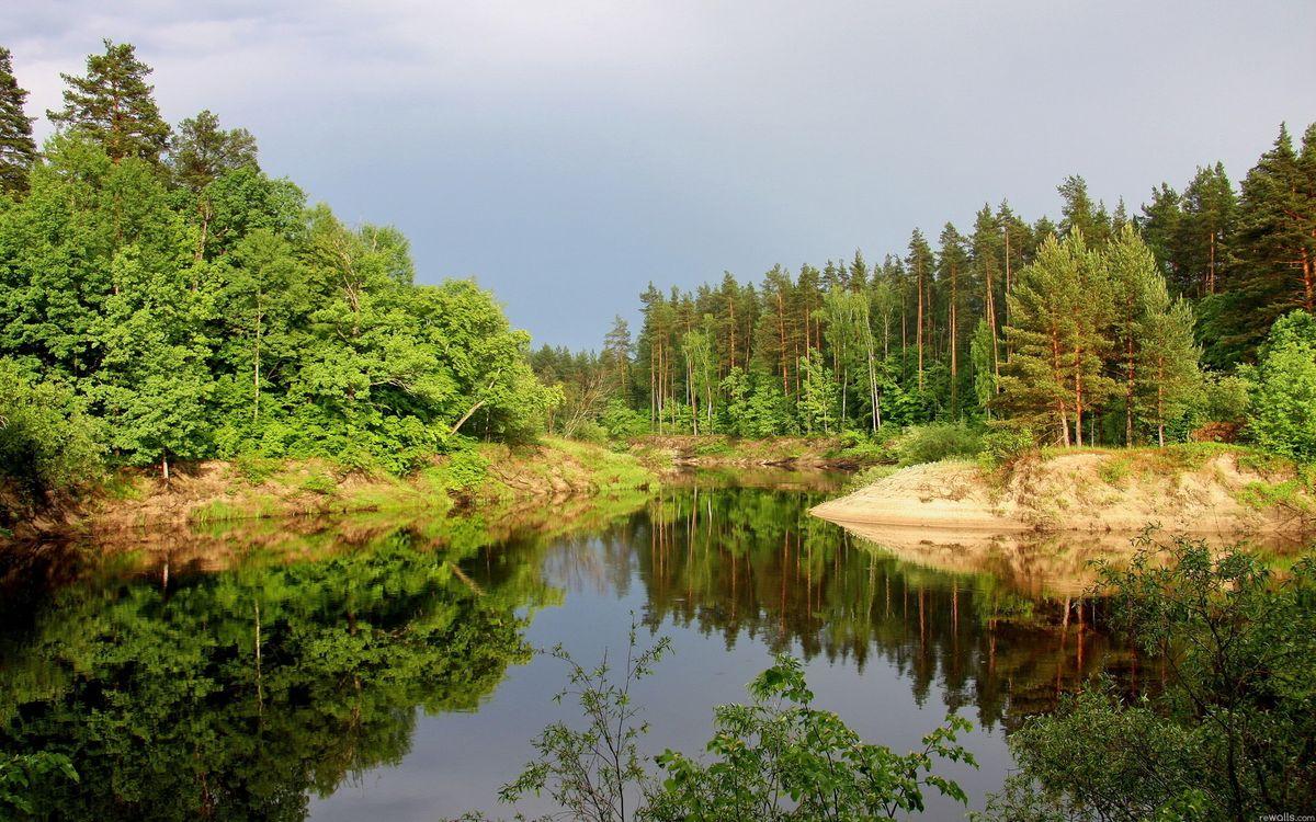 Фото бесплатно деревья, лес, елки, крона, зелень, небо, река, вода, песок, берега, природа, природа