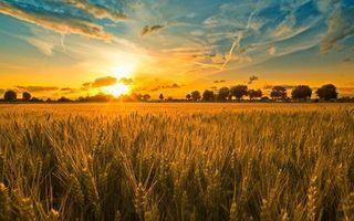 Фото бесплатно закат, пшеничное, поле