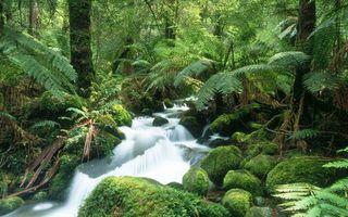 Бесплатные фото ручей в лесу,трава,деревья,папоротники,вода,мох,ручеек