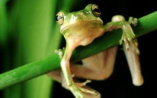 Photo free frog, branch, grass