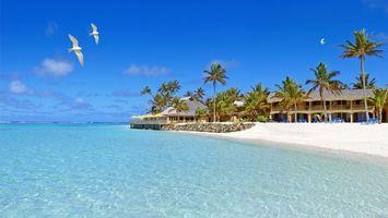 Фото бесплатно прозрачная, чайки, песок