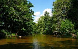 Фото бесплатно природа, лес, кроны