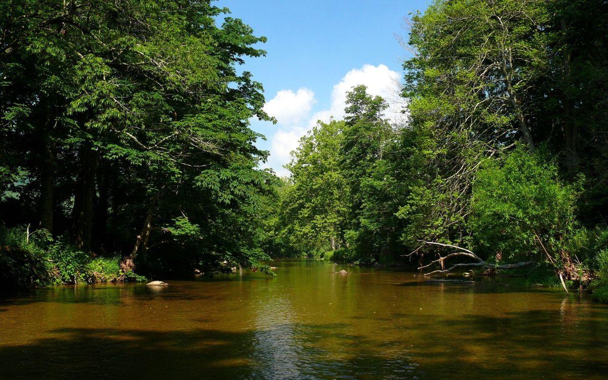 Фото бесплатно природа, лес, кроны - на рабочий стол