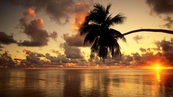 Фото бесплатно океан, пальма, небо