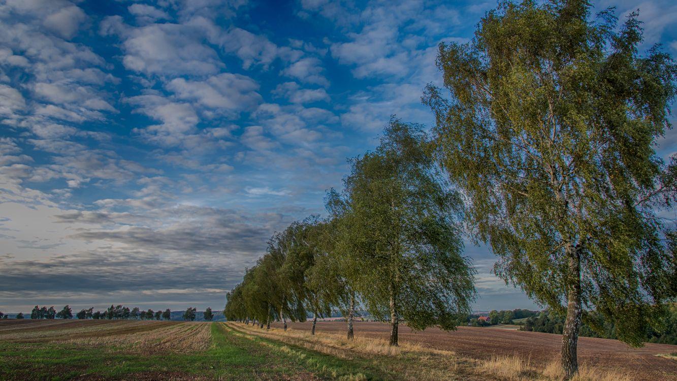 Фото бесплатно поле, небо, берёзы - на рабочий стол