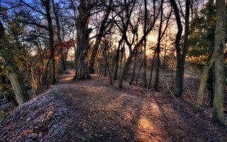 Бесплатные фото старый лес,деревья,осень,иней,тропинка,утро,природа