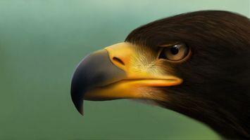 Фото бесплатно ястреб, клюв, глаза, хищник, птицы, рисунок, рендеринг