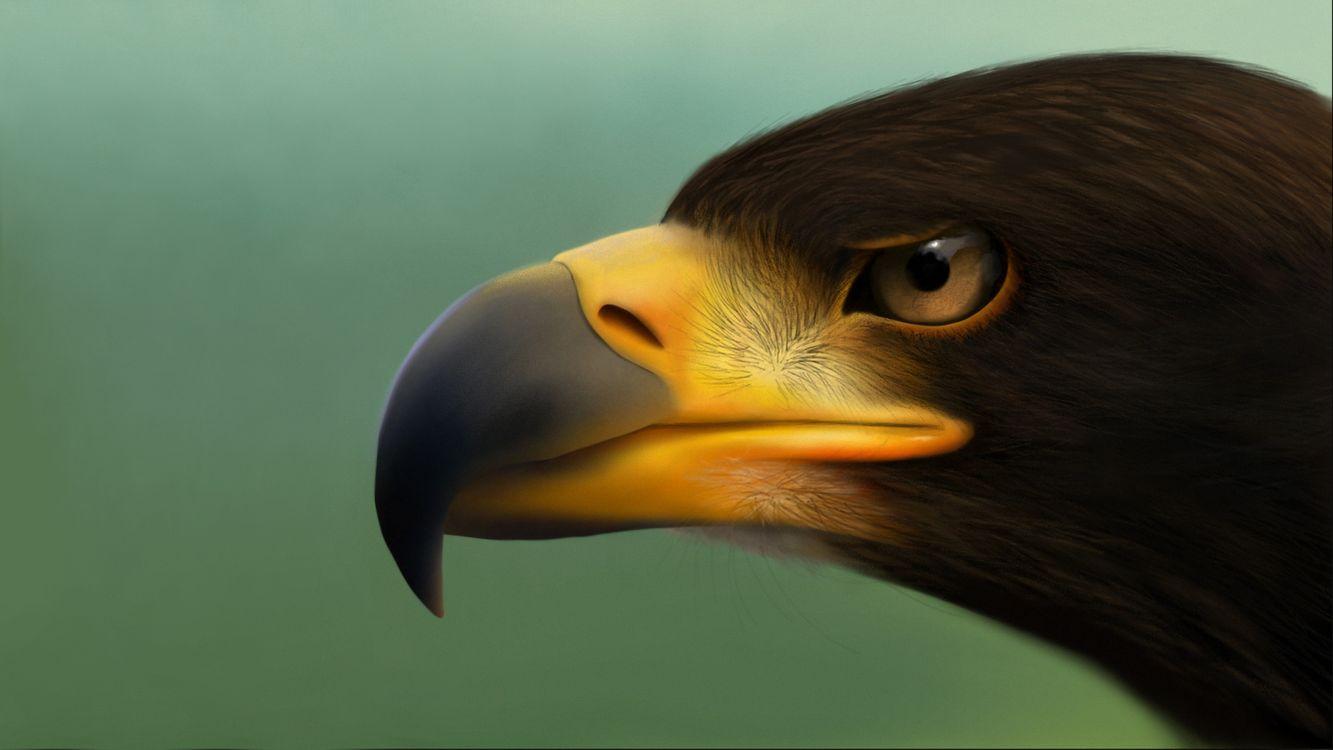нос птицы картинка