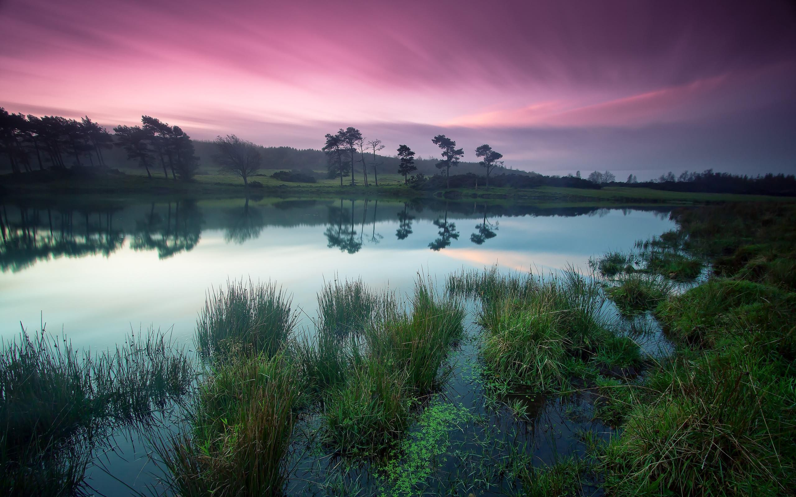 природа деревья небо озеро трава вода бесплатно