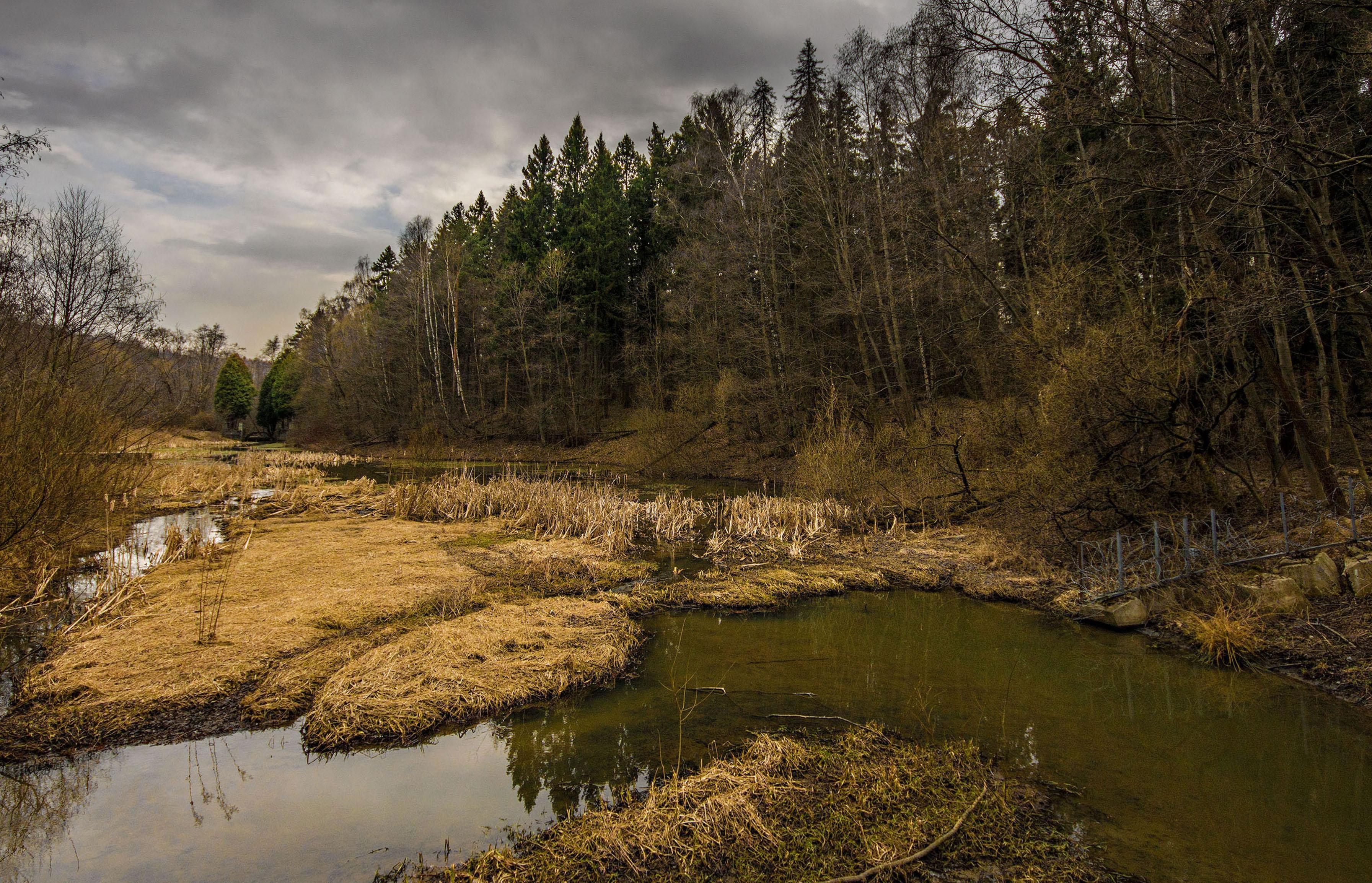 весна, лес, болото