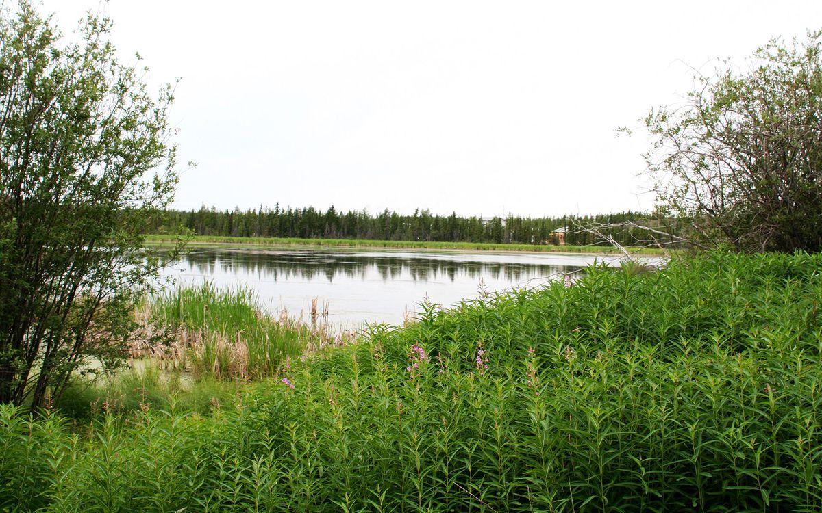 Фото бесплатно деревья, озеро, трава - на рабочий стол