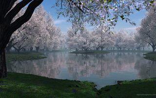 Фото бесплатно берег, лес, вода