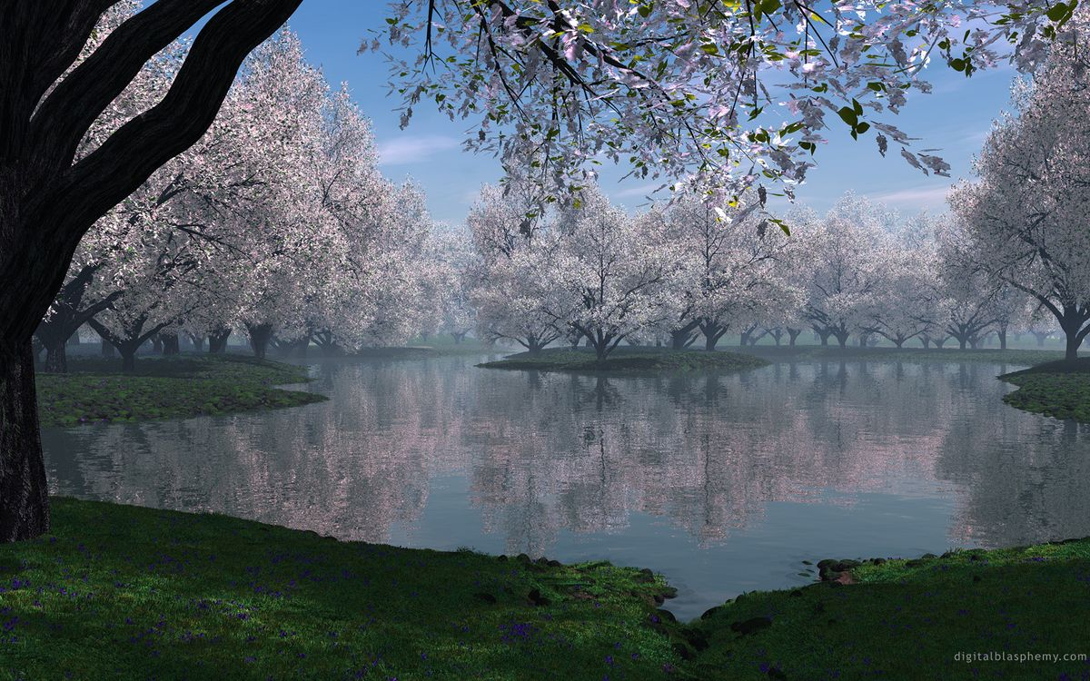 Фото бесплатно берег, лес, вода - на рабочий стол