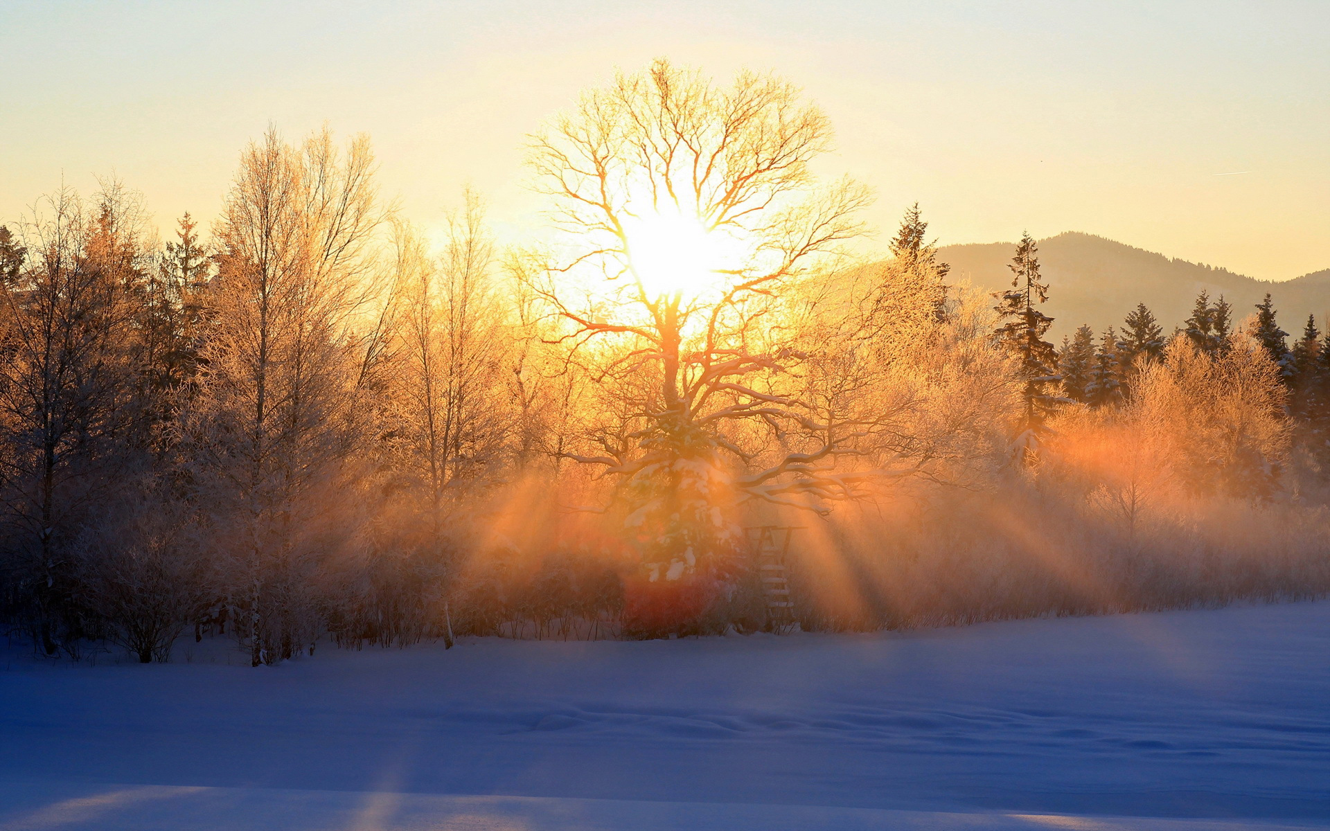 Снег, лучи, солнце, лес, ели бесплатно