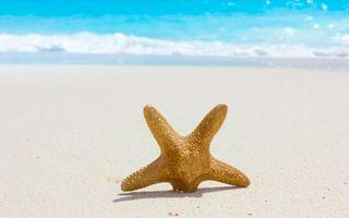 Фото бесплатно звезда, морская, берег, песок, пляж, воткнута, океан, волны, природа