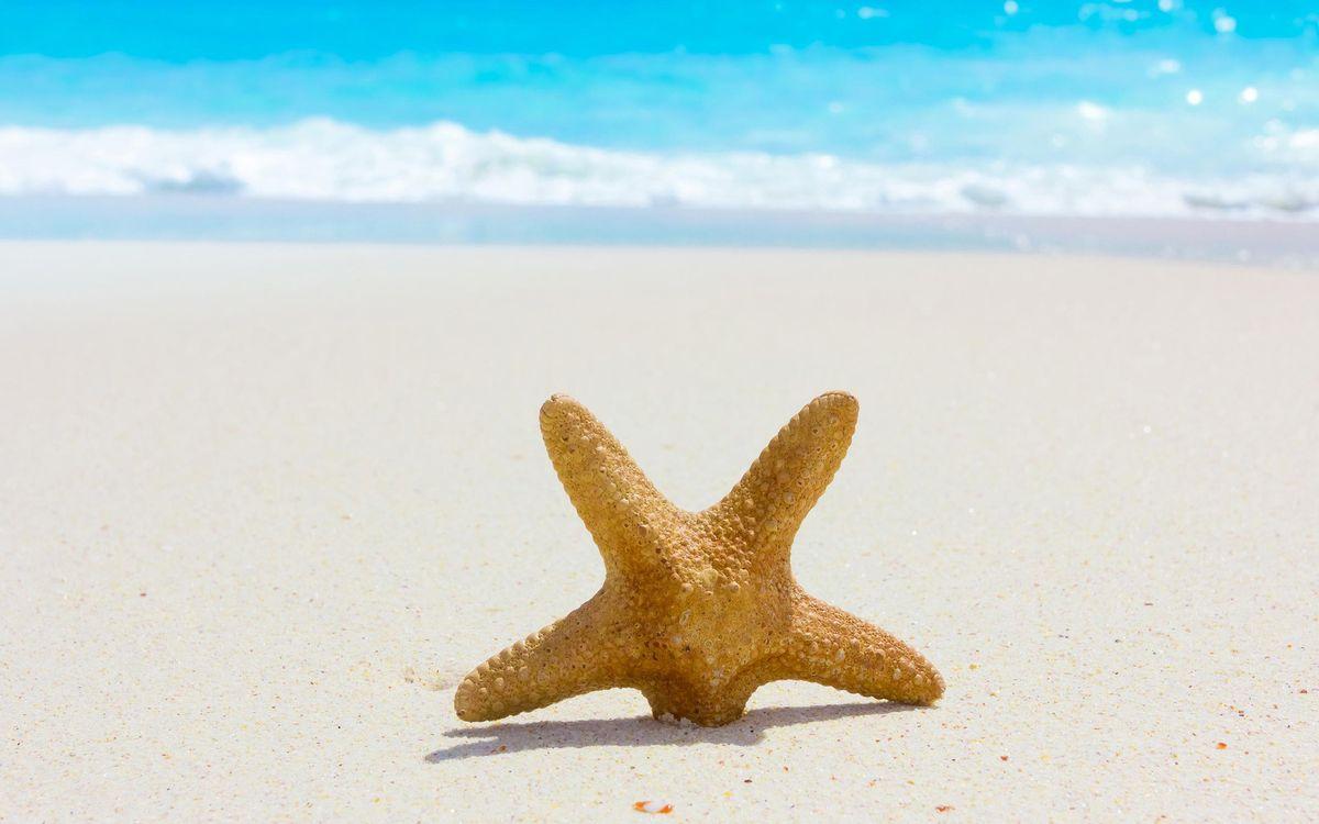 Фото бесплатно песок, волны, застрял - на рабочий стол