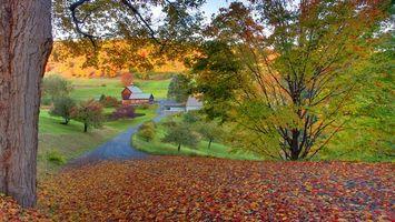 Бесплатные фото осень,листва,деревья,трава,земля,природа