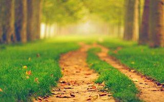 Photo free alley, path, grass
