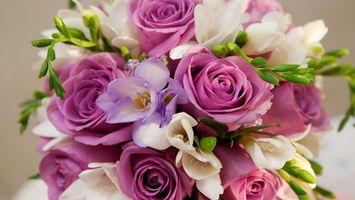 Фото бесплатно букет, цветы, разные