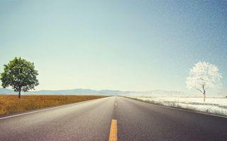 Бесплатные фото дорога,разметка,зима,дерево,иней,лето,листва