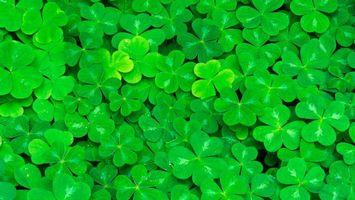 Бесплатные фото клевер,трилистник,тысячелистник,роса,зеленый,природа,разное