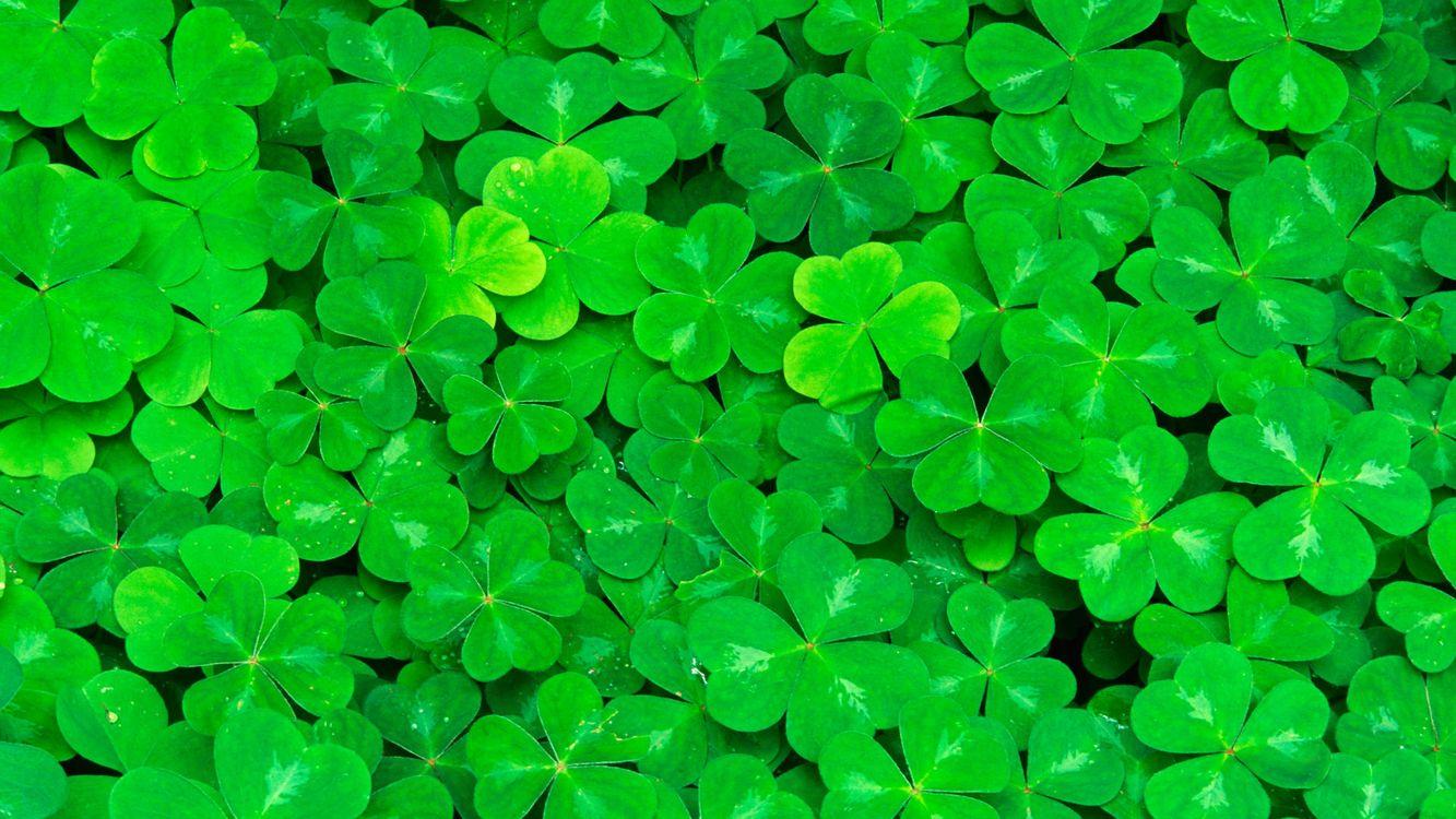 Фото бесплатно клевер, трилистник, тысячелистник, роса, зеленый, природа, разное, разное